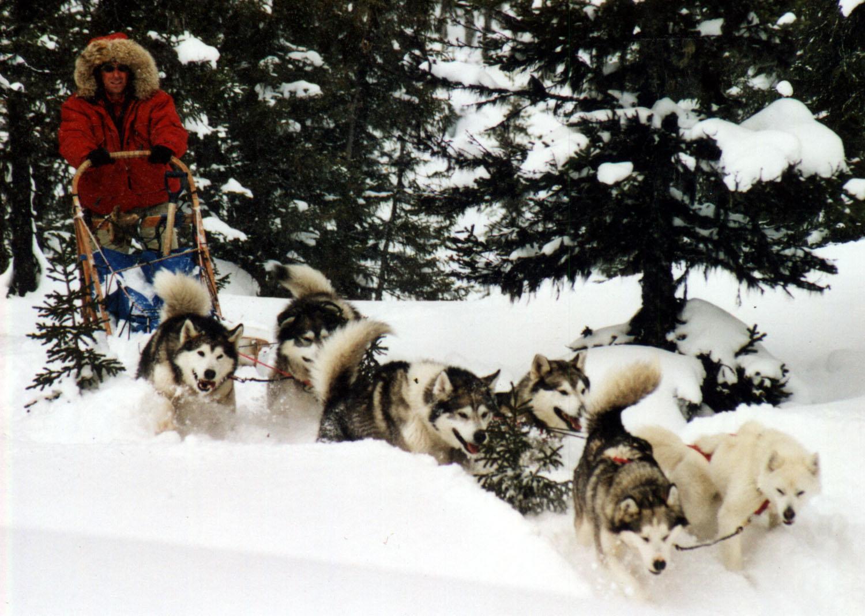 Siberian Husky Quebec DOGSLEDDING IN QUEBEC
